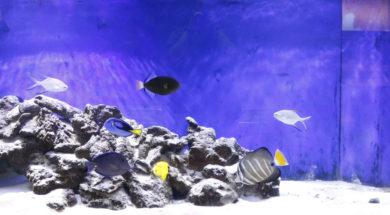 The Reef Aquarium