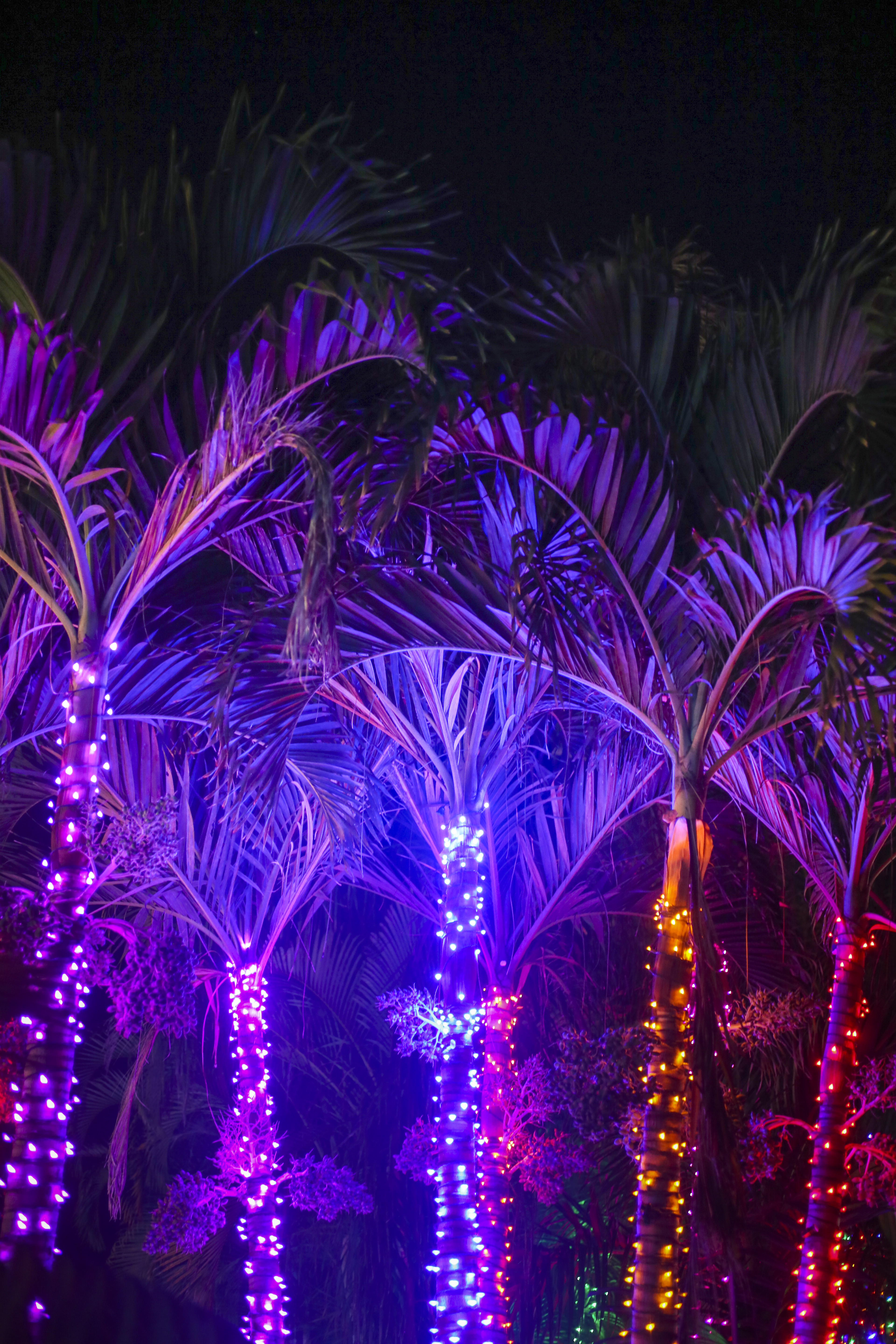 Merry And Bright Where You Can Find Holiday Lights The